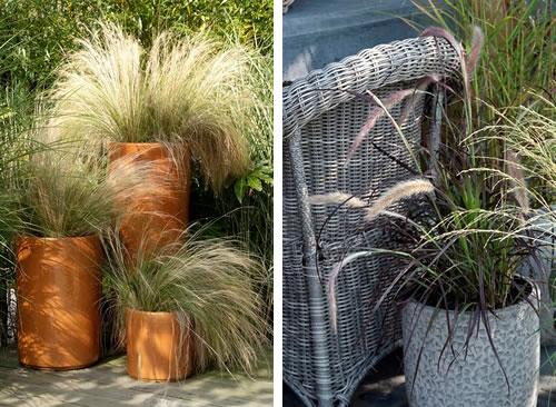 Grassen In Pot.Wuivende Siergrassen Grollemangroen